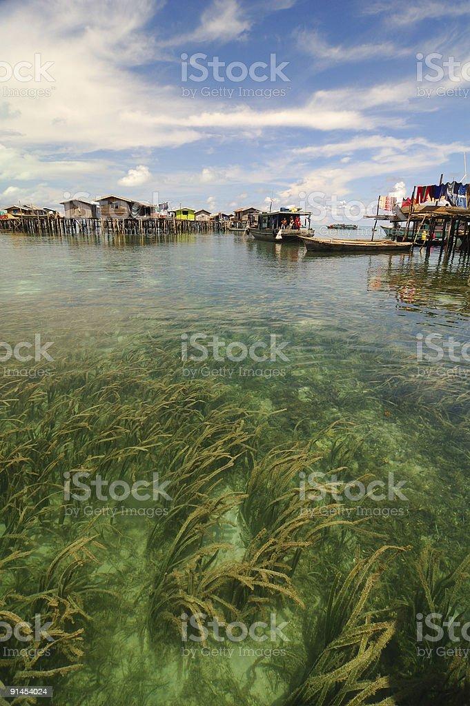 Sea weed royalty-free stock photo