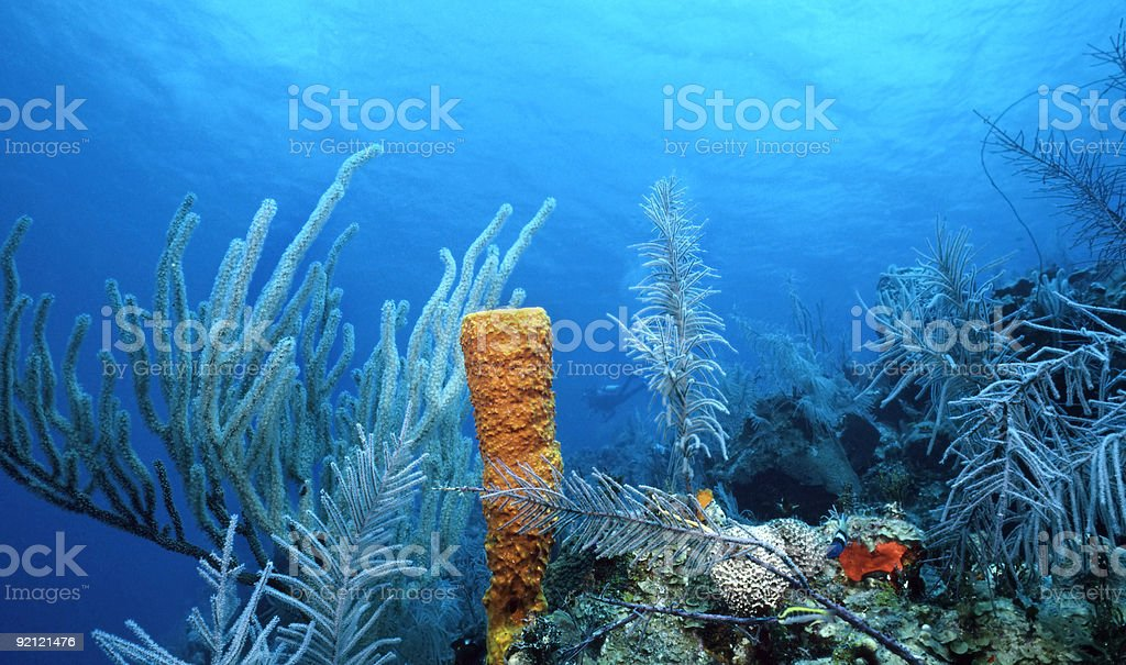 Sea Whips and Yellow Sponge royalty-free stock photo
