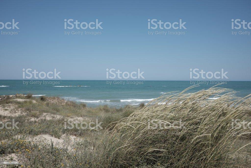 Sea with dunes stock photo