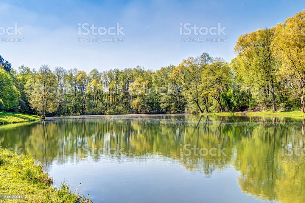 Sea with trees stock photo