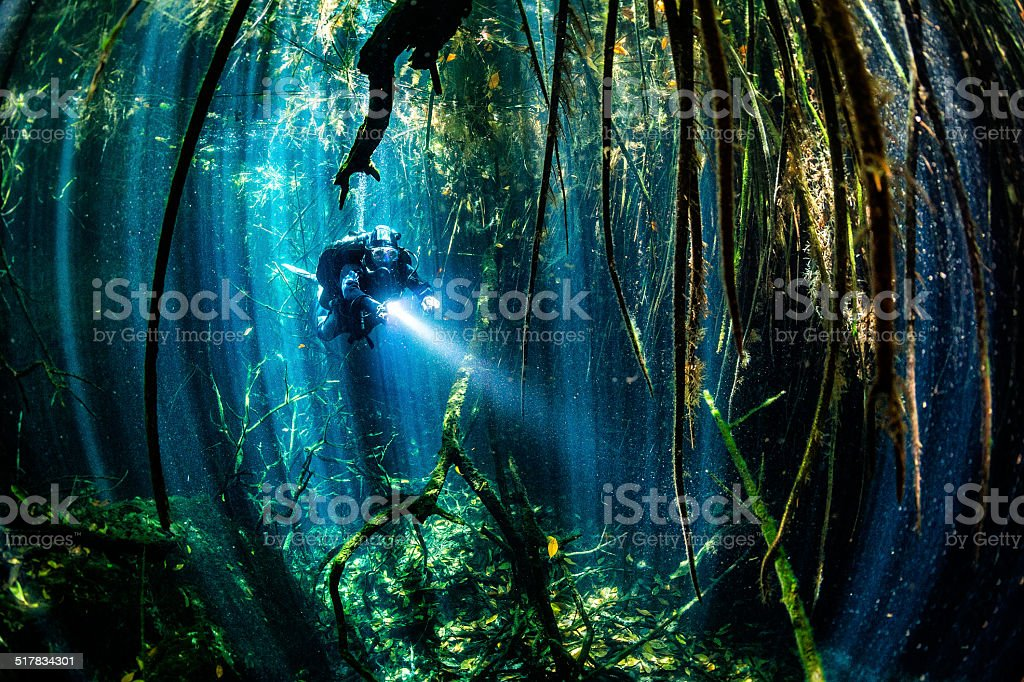 Sea xenotes stock photo