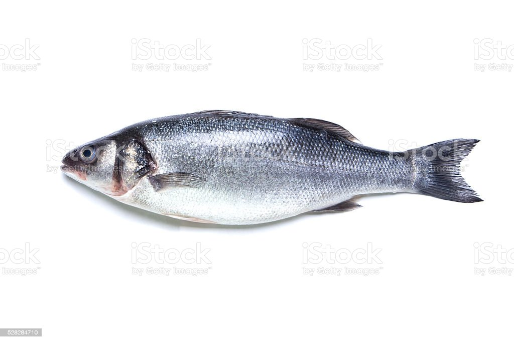 seabass fish isolated stock photo