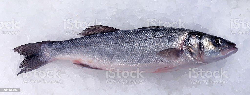 Seabass (Dicentrarchus labrax) on ice stock photo