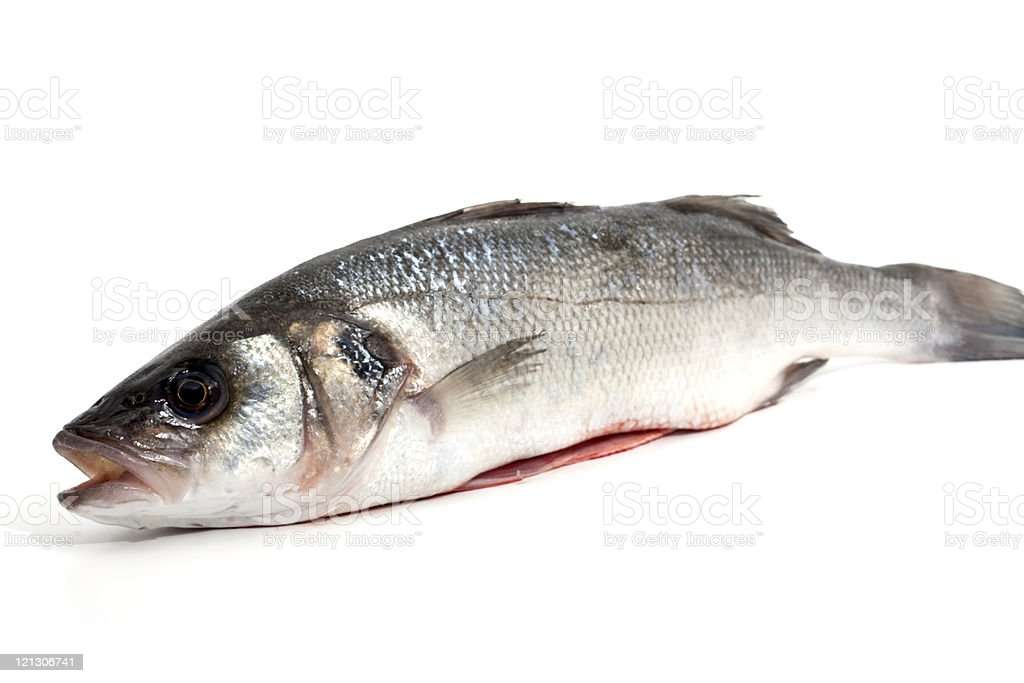 seabass royalty-free stock photo