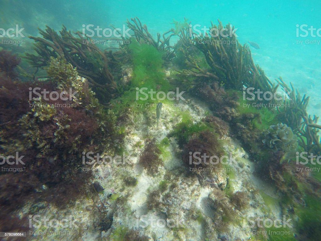 Seabed stock photo