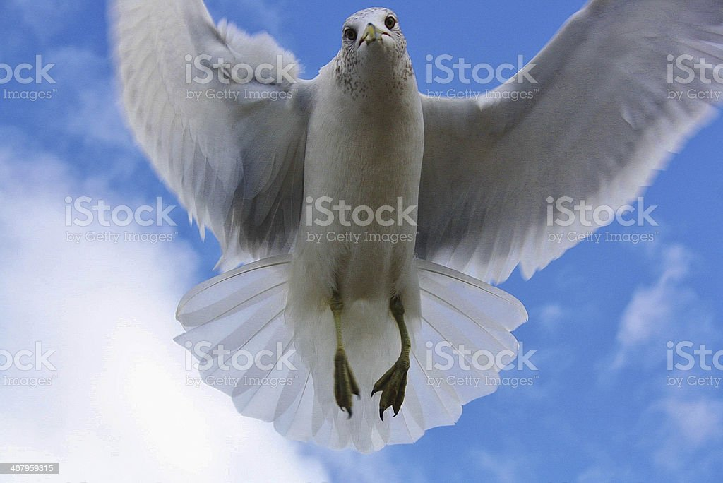 Seabird Close-up royalty-free stock photo