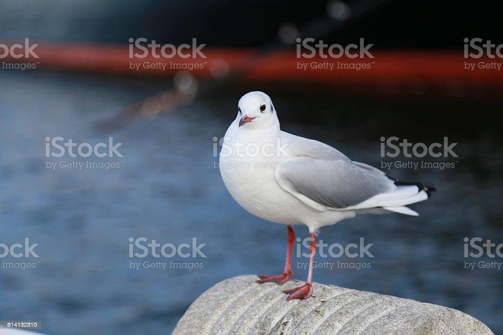 Seabird of the port foto de stock libre de derechos