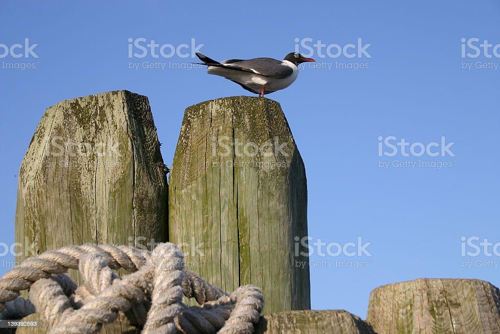 seabird on a dock royalty-free stock photo