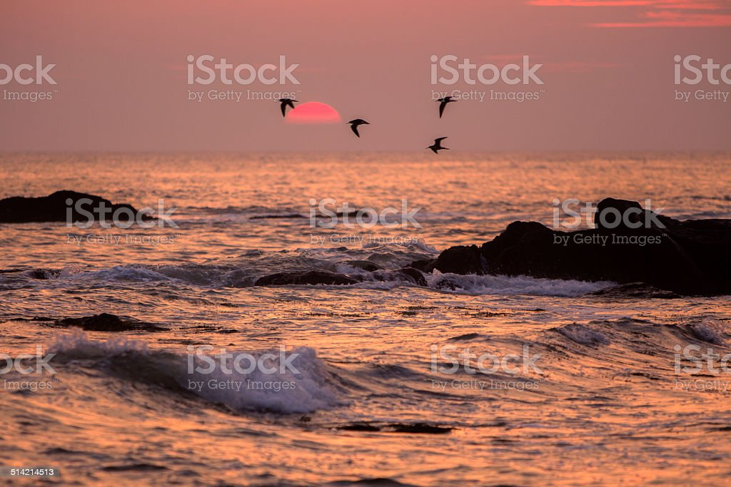 seabirds and setting sun, Newfoundland stock photo