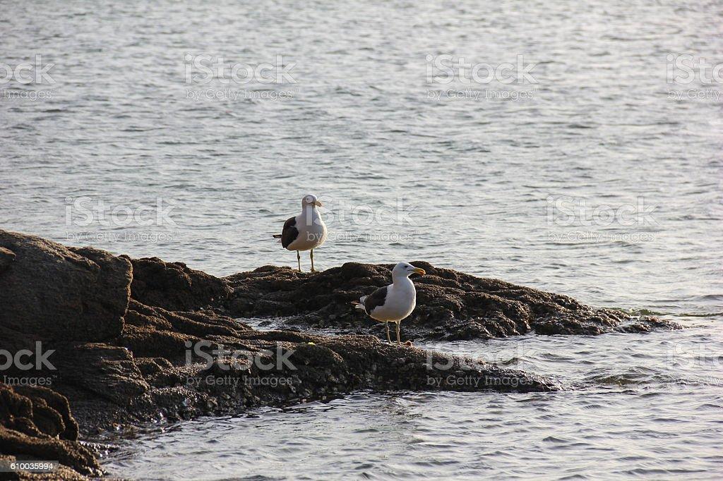 Seabirds on rock at seaside stock photo