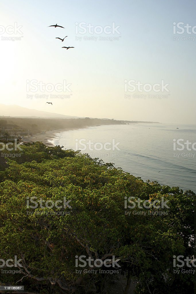Seabirds over the bay royalty-free stock photo