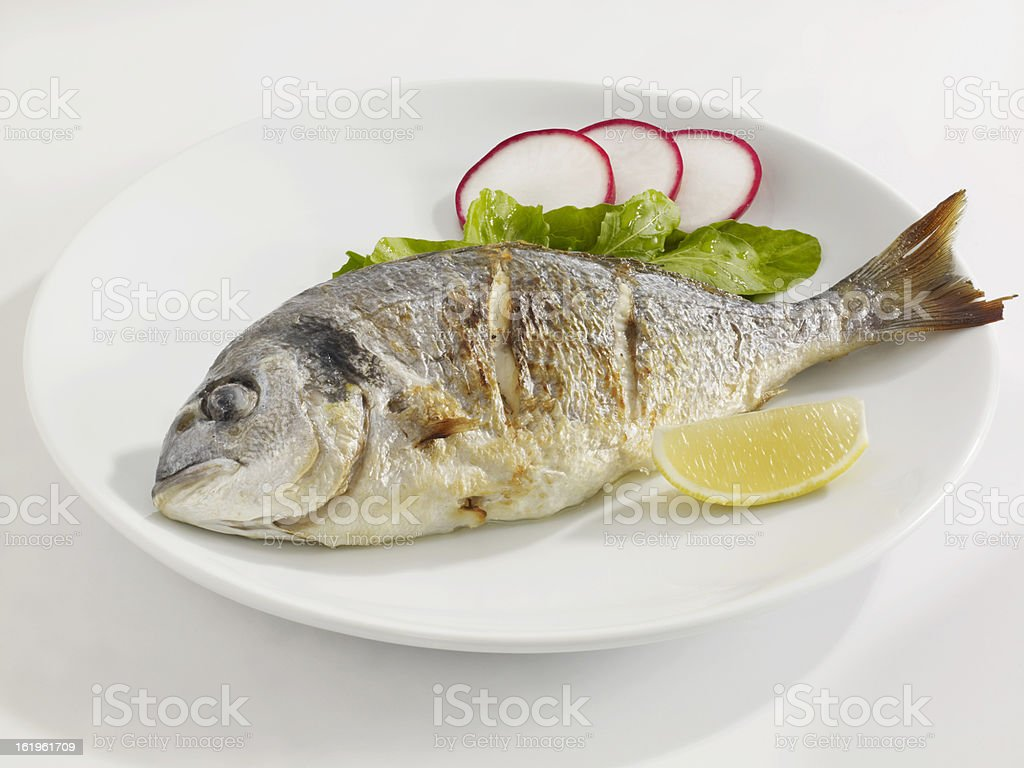 Seabream royalty-free stock photo