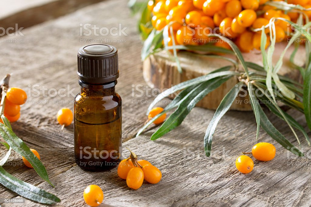 Seabuckthorn berries branch of sea buckthorn and oil stock photo