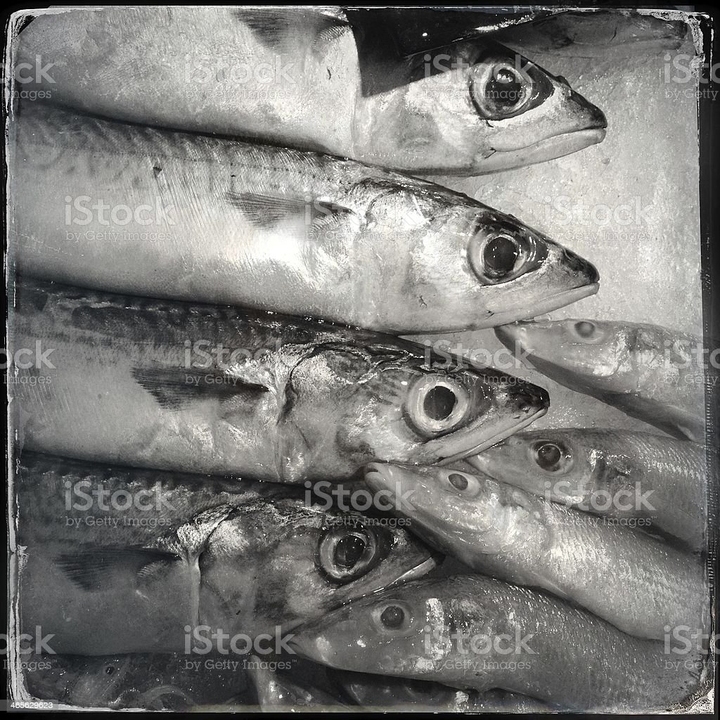 seafish royalty-free stock photo