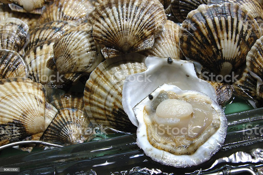 Seafood: Collection of scallops in shells royalty-free stock photo