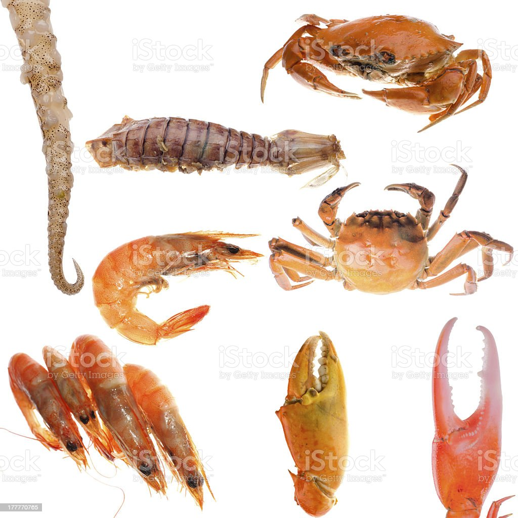seafood  collection stock photo