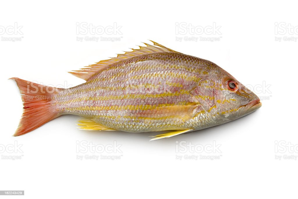 Seafood: Lane Snapper stock photo