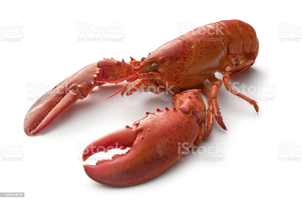 Seafood: Lobster royalty-free stock photo