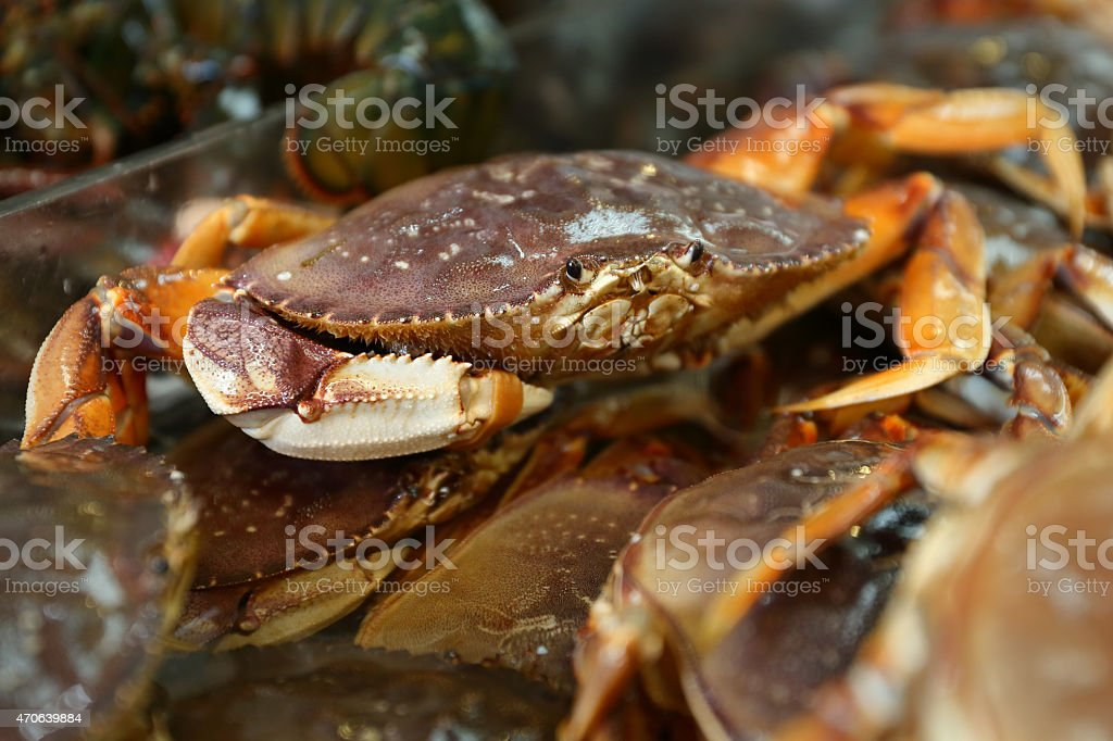 Seafood Market Live Dungeness Crabs stock photo