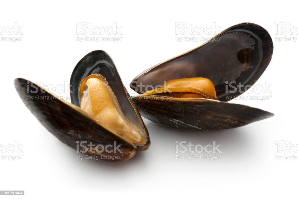 Seafood: Mussels royalty-free stock photo