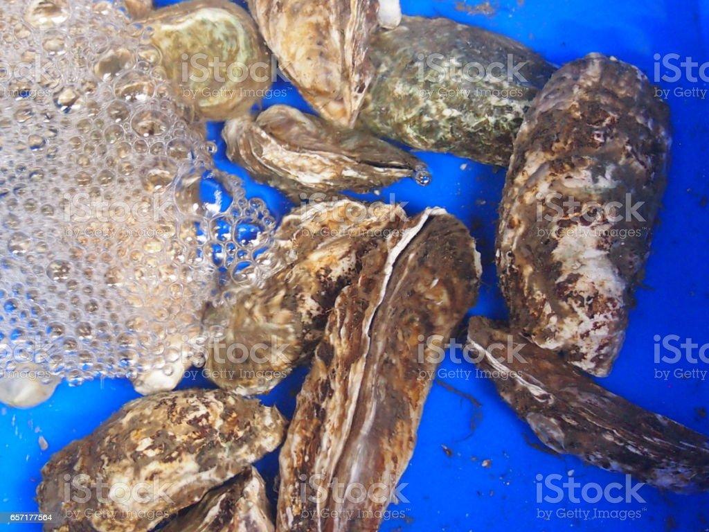 Seafood stock photo