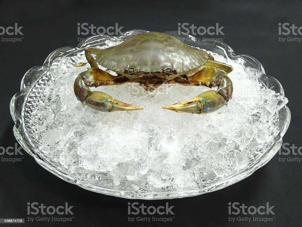 seafood platter - fresh mud crab on ice 1 stock photo