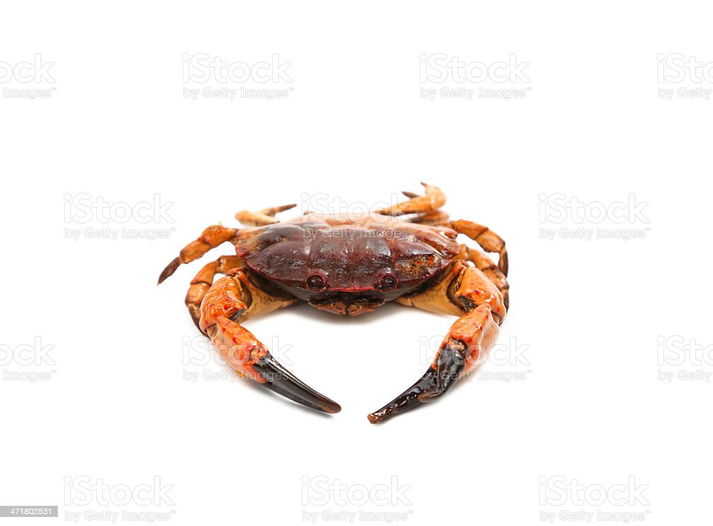 seafood red crab royalty-free stock photo