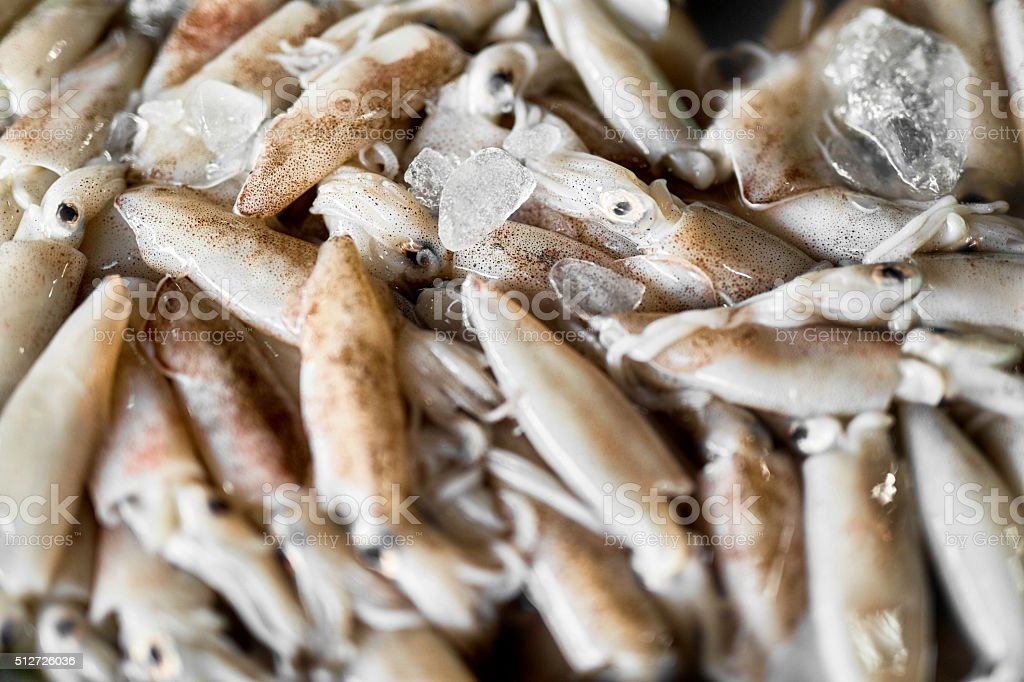 Seafood. Squids ( Calamari ) At Farmers Market. Healthy Food stock photo