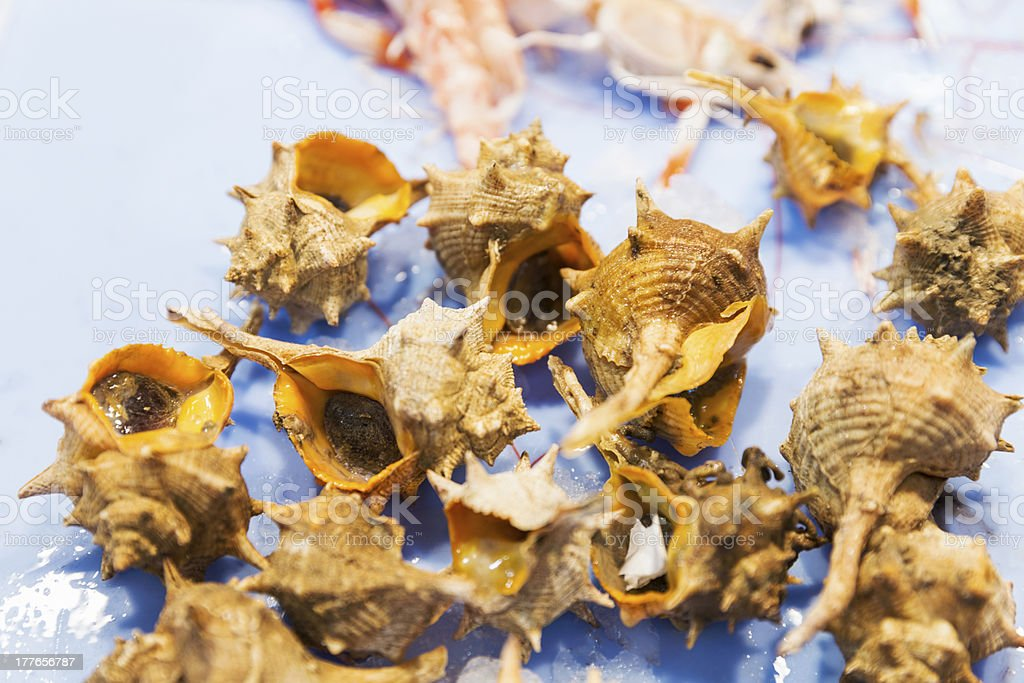 Seafood variety - Bolinus brandaris shell stock photo