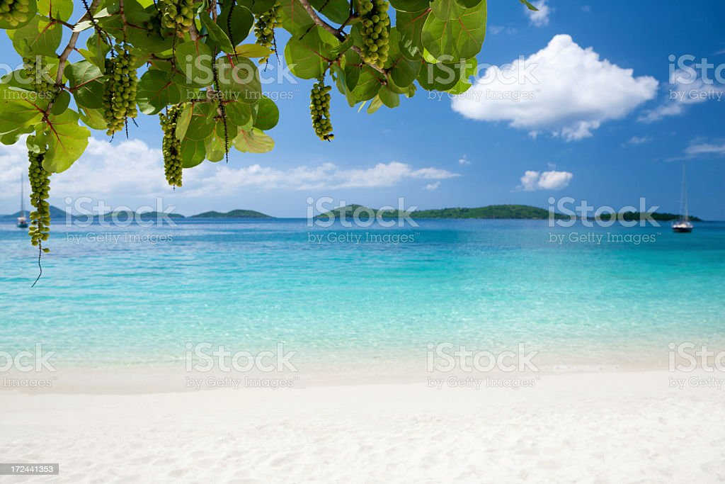 seagrapes at Honeymoon Bay, St. John, US Virgin Islands stock photo
