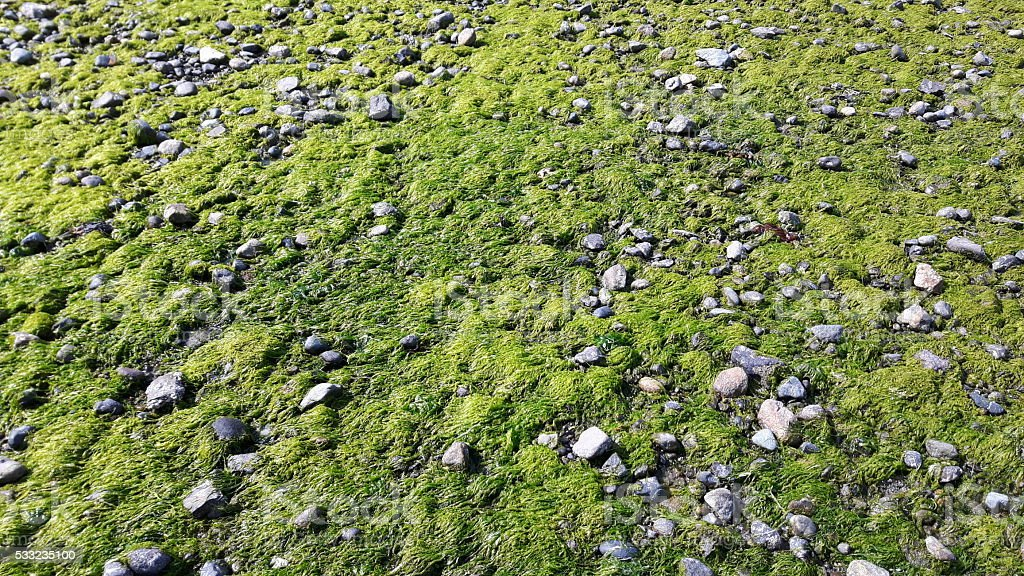 Seagrass and stones background stock photo