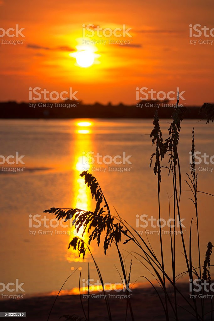 Seagrass and Sunset stock photo