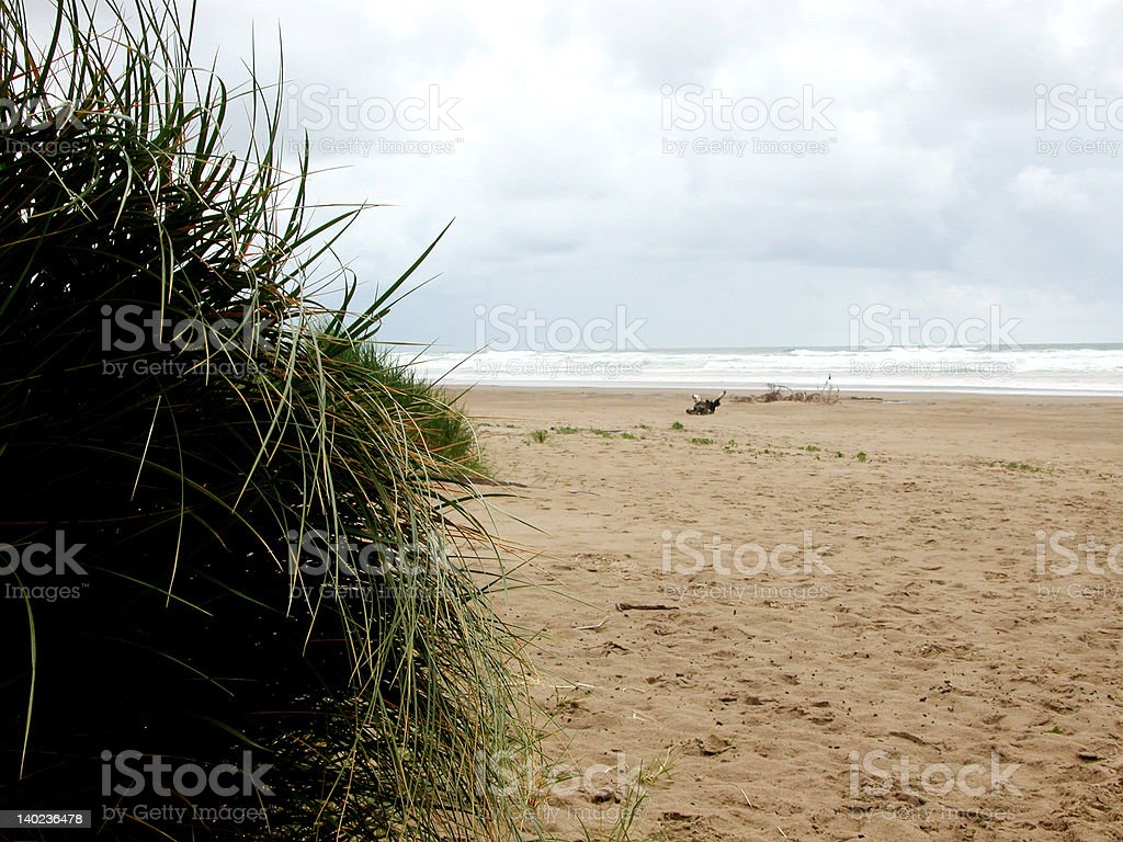 Seagrass meets the Horizon royalty-free stock photo