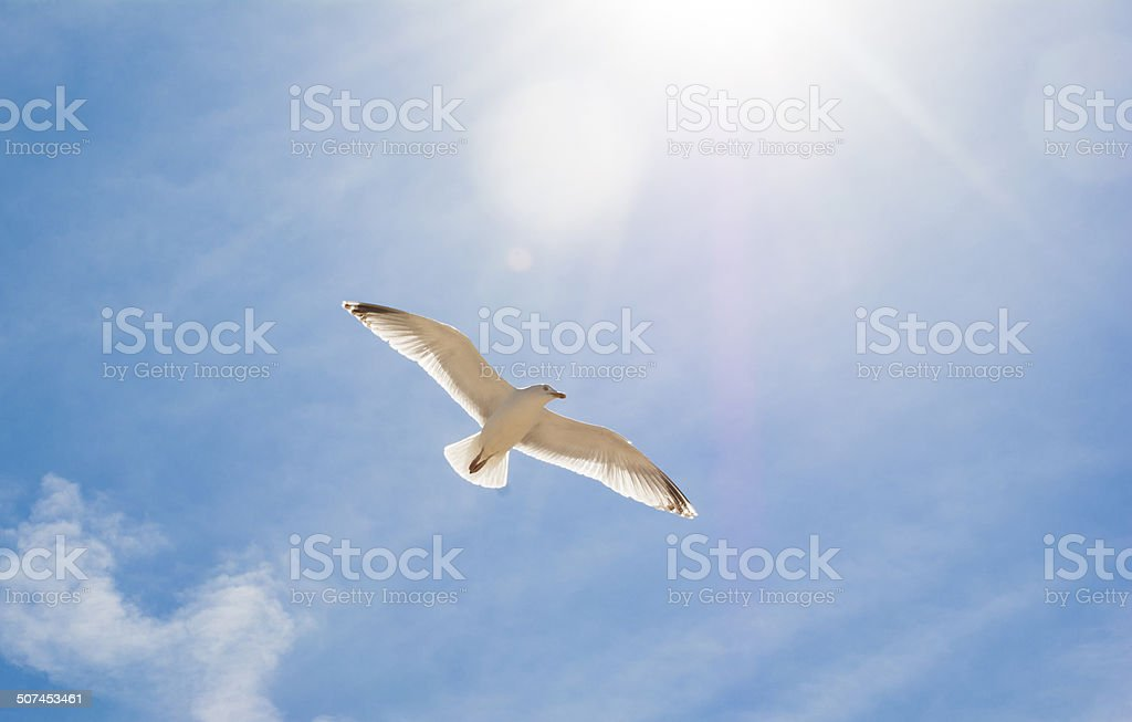 Seagul Flying Above Beach stock photo