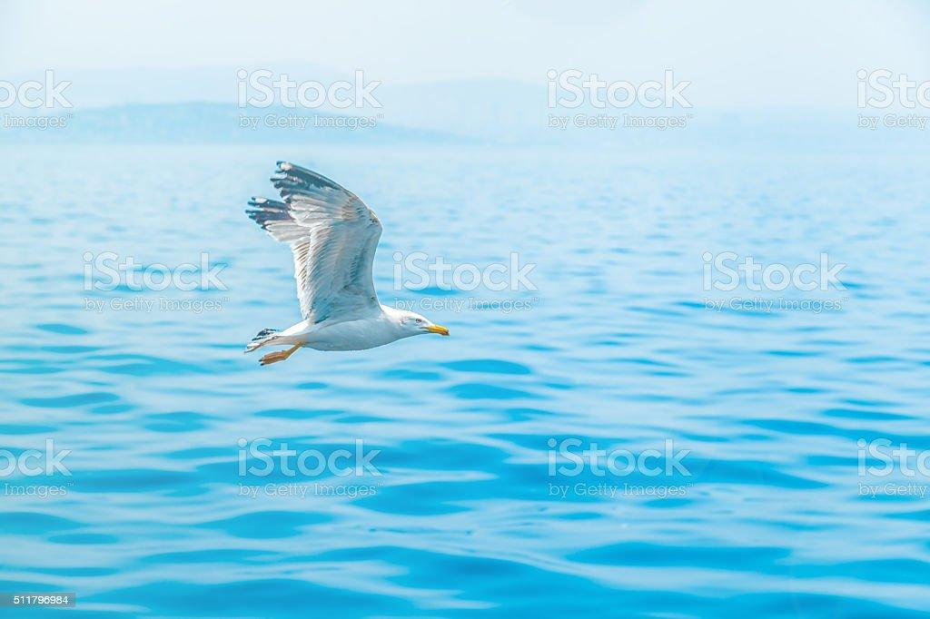 Seagul Flying Above Sea stock photo