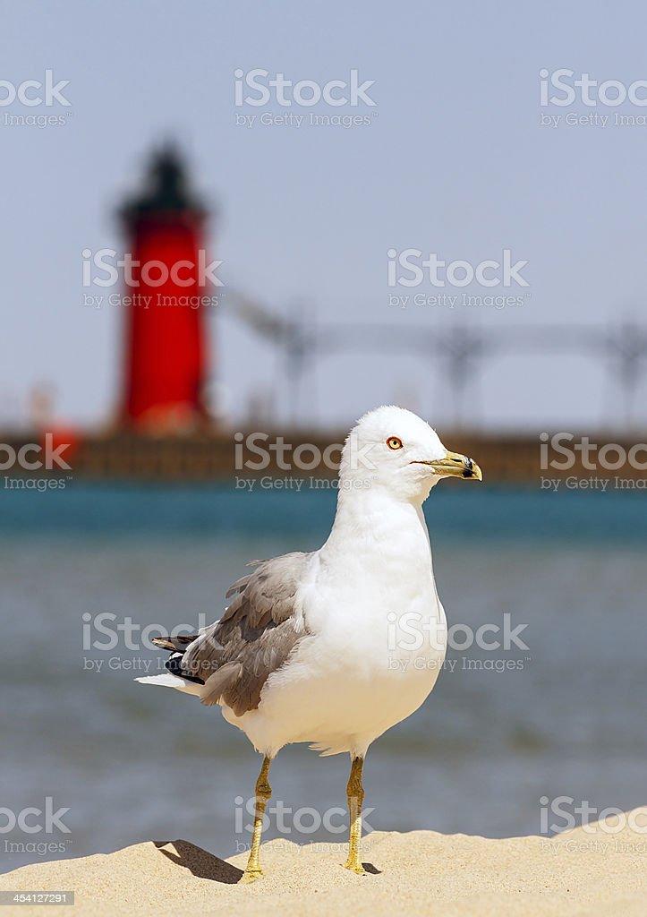 Seagul con Faro di South Haven foto stock royalty-free