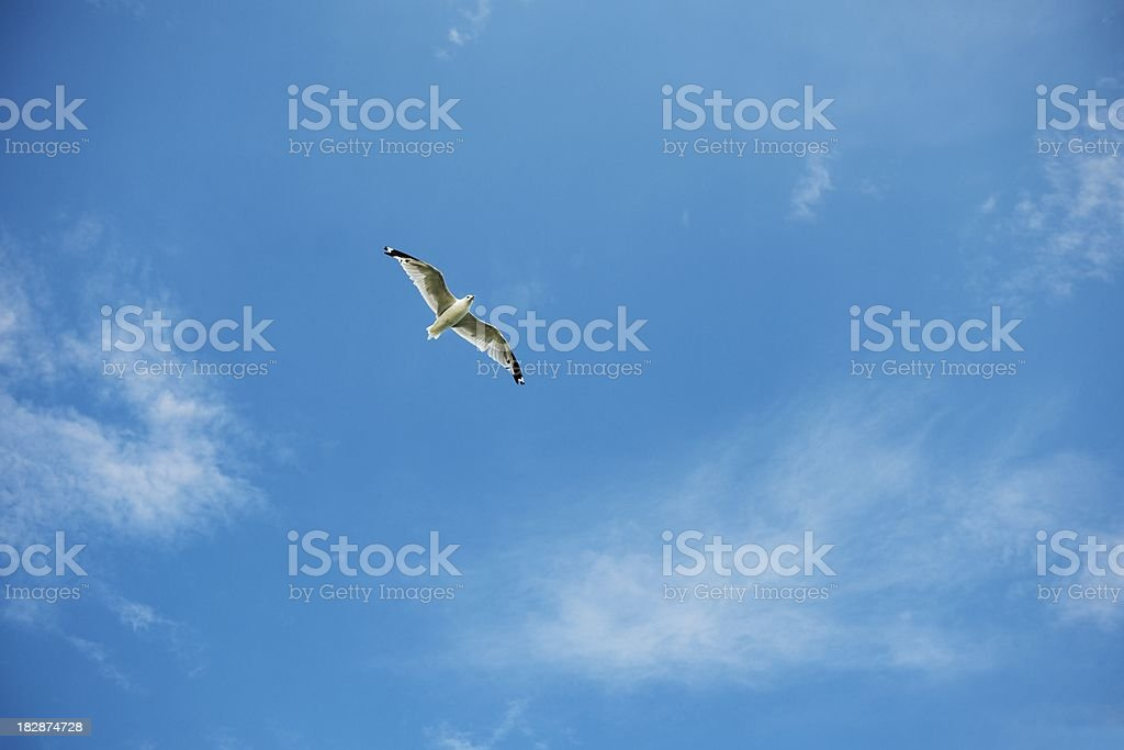 Seagull above royalty-free stock photo