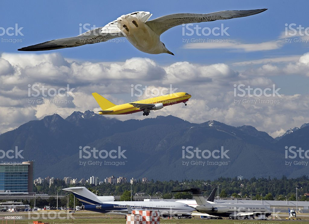 Seagull and airplane stock photo