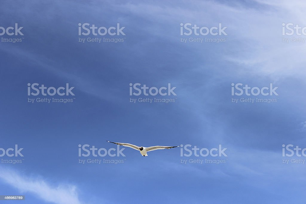 seagull and blue sky royalty-free stock photo