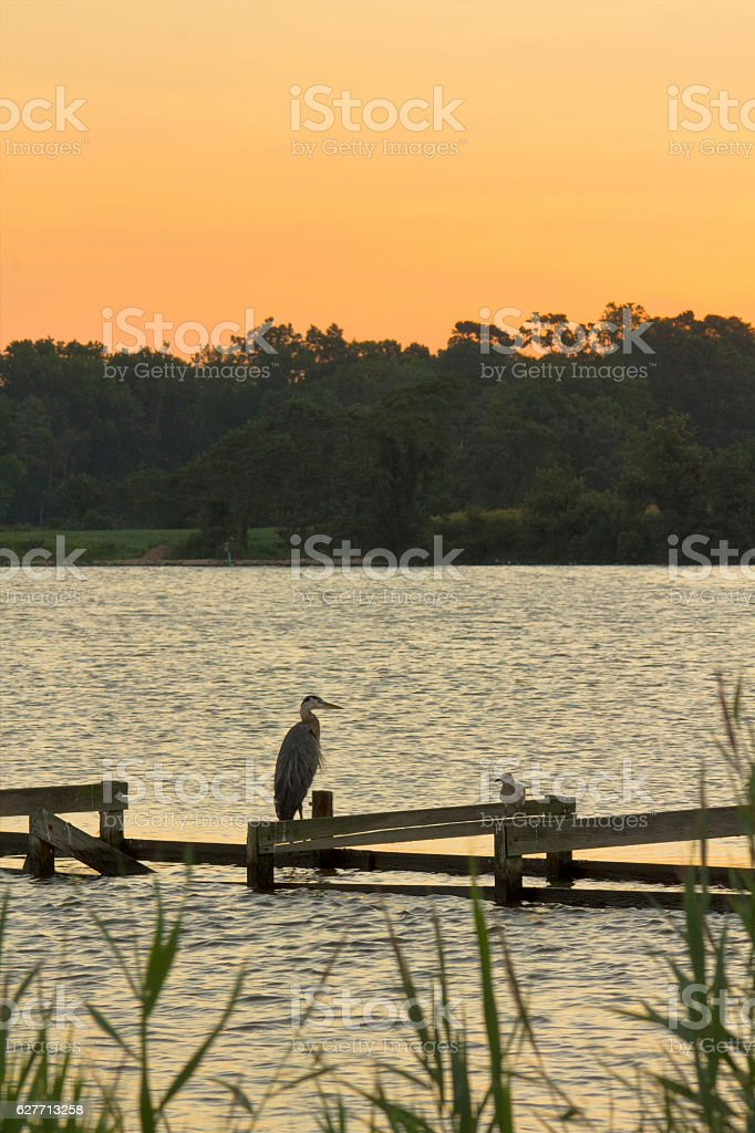 Seagull and heron on pier stock photo