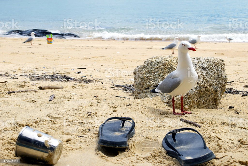 Seagull and Jandals Seascape, Kaiteriteri, New Zealand stock photo