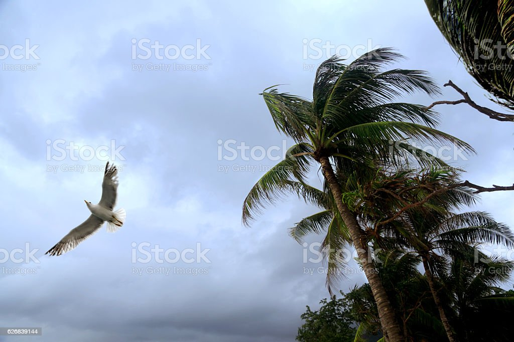 seagull and palm trees in storm stock photo