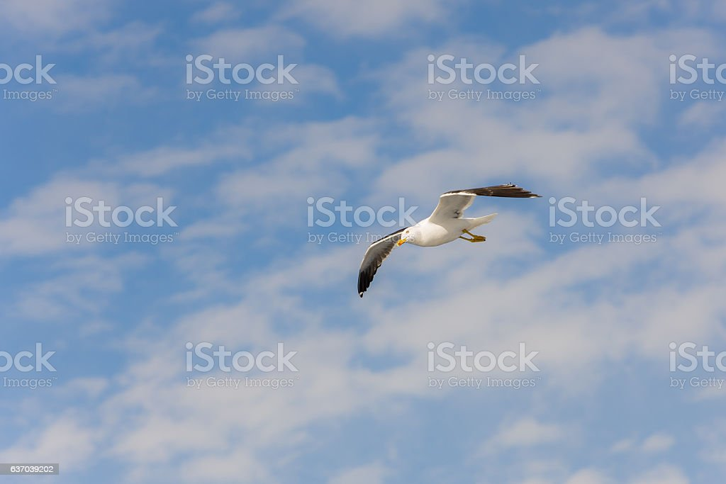 seagull and sky stock photo