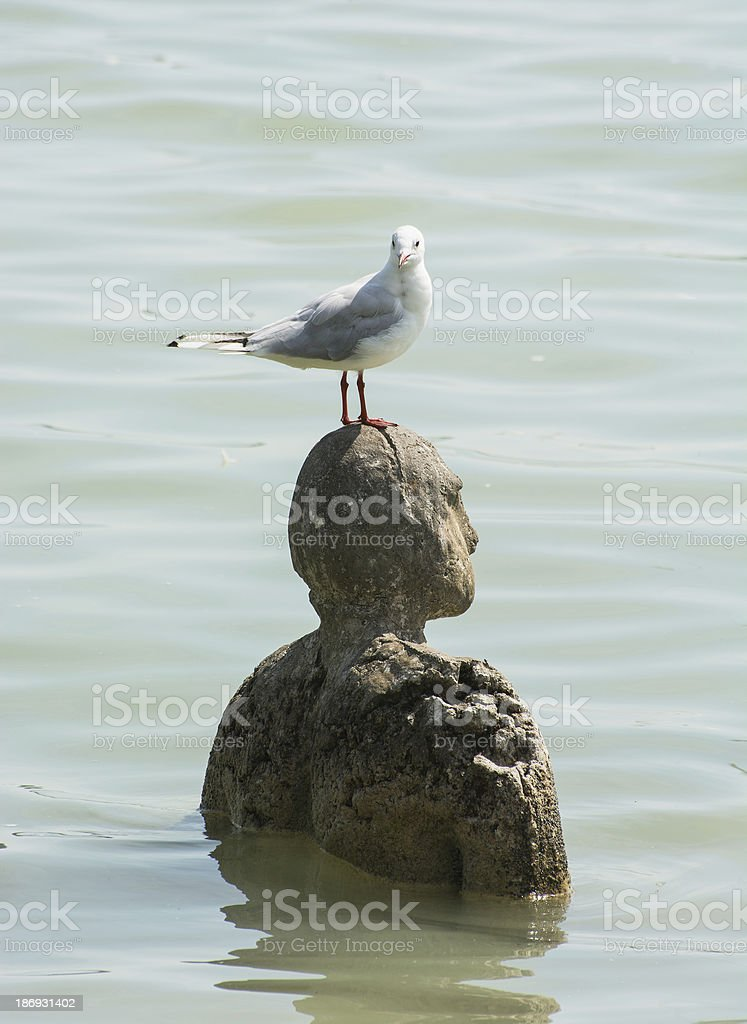 Sea-gull and statue in water stock photo