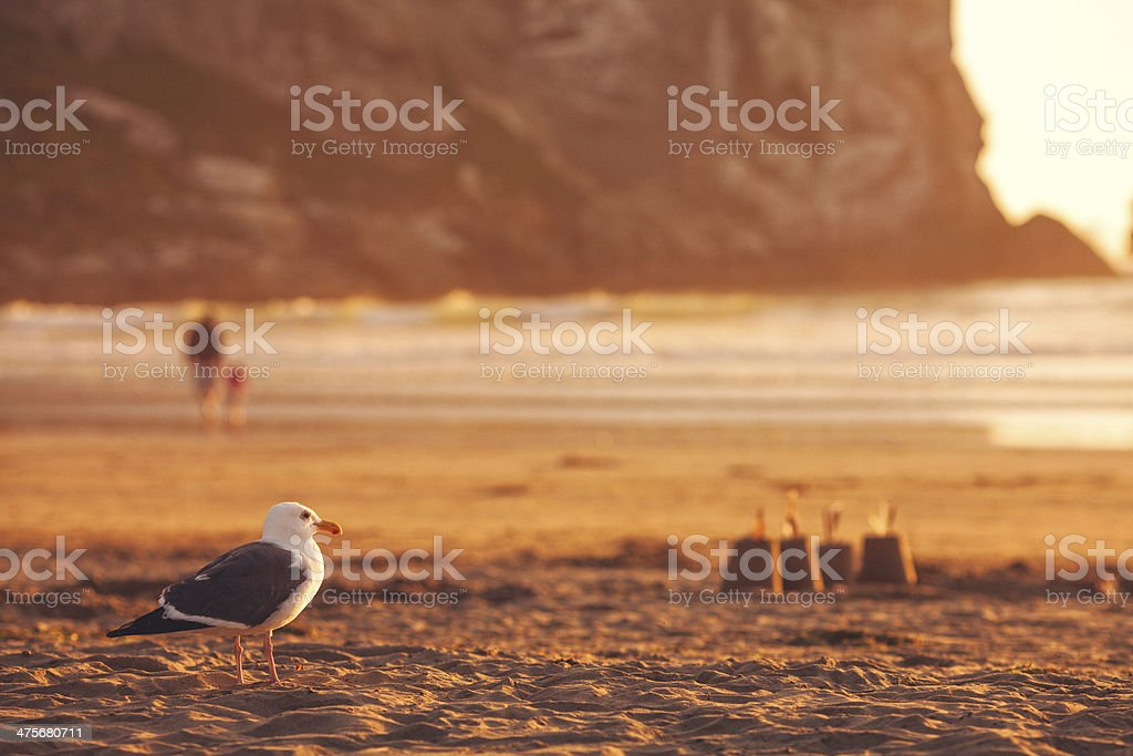 Seagull and the beach royalty-free stock photo