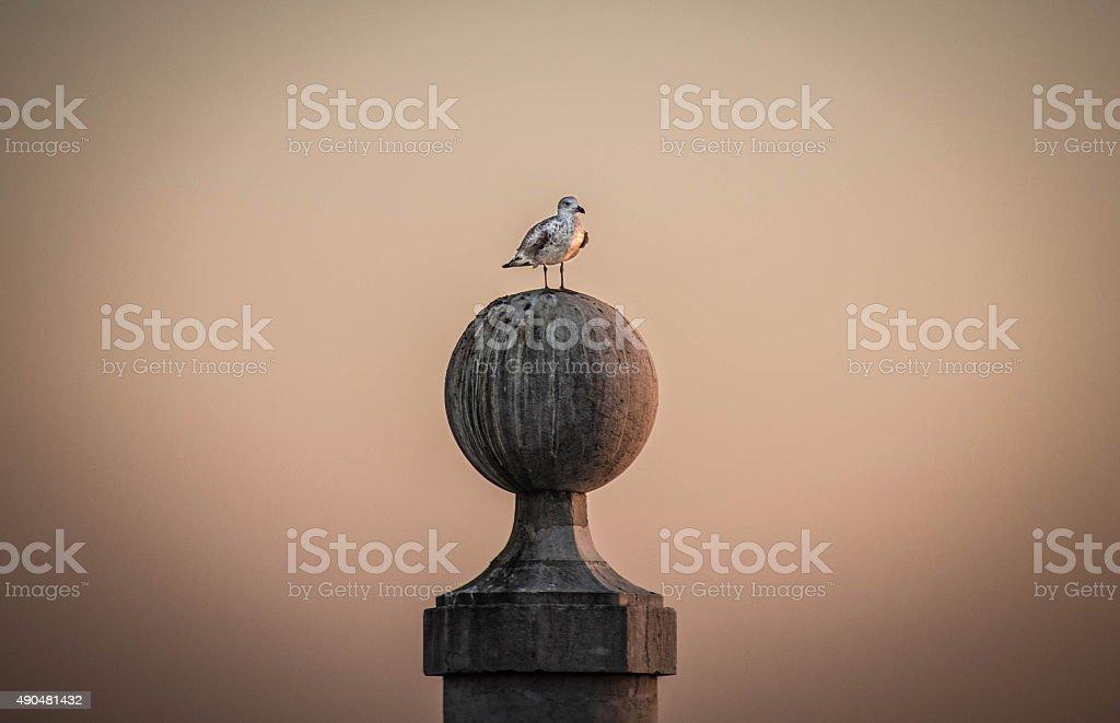 Seagull at Lisbon Sunset stock photo