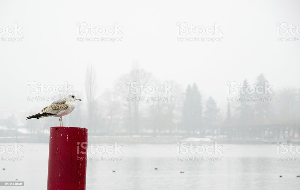 Seagull at Pier of Lake Traun stock photo