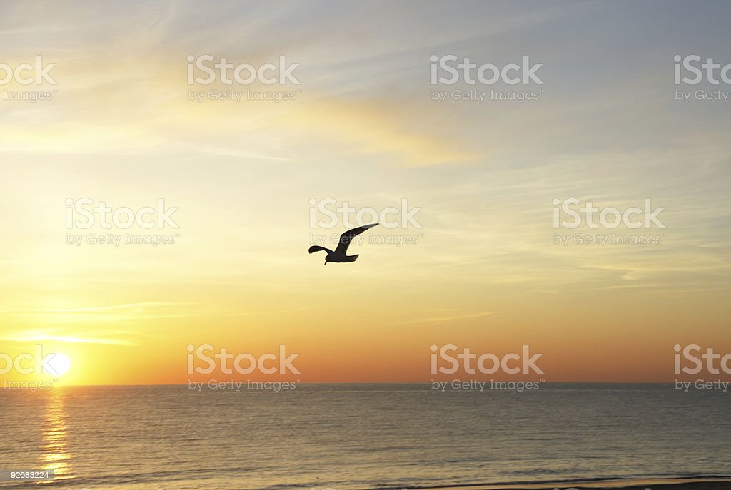 Seagull at Sunrise royalty-free stock photo