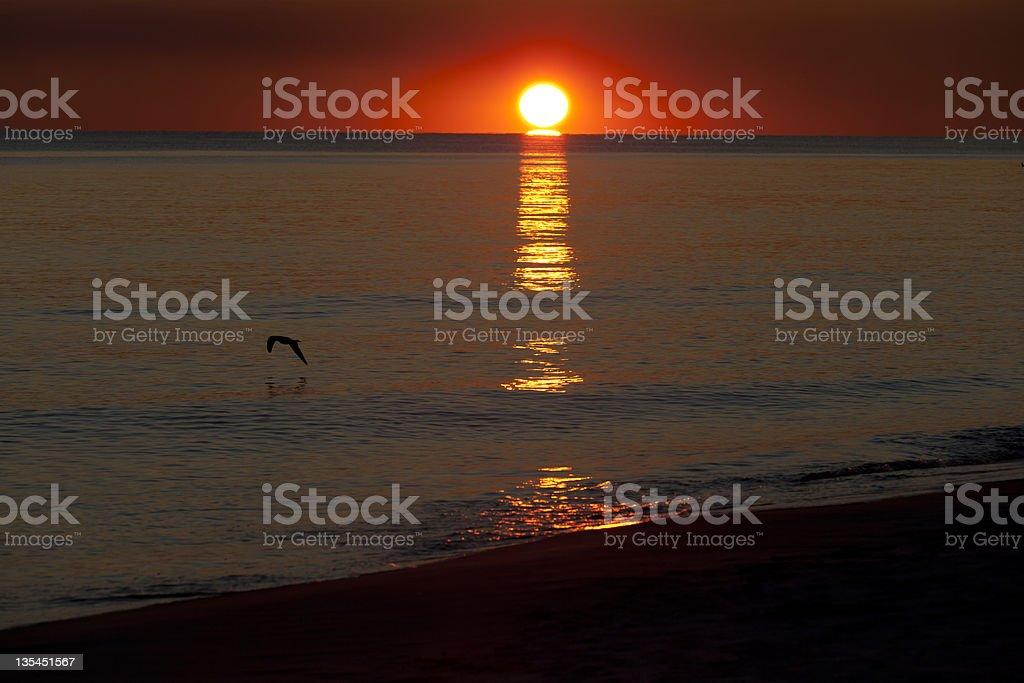 Seagull at Sunset II stock photo