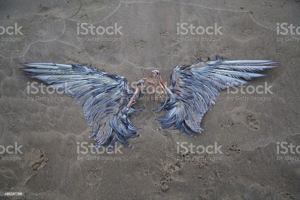 Seagull carcass on the beach stock photo